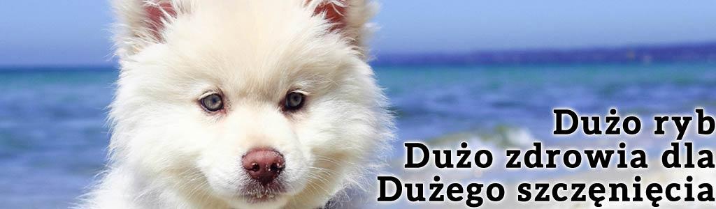 Maintenance puppy z rybą - karma dla psa, która zabezpieczy Twoje szczenię przed wieloba problemami i chorobami. Naturalne składniki i czyste białko. Takie proste i takie skuteczne.