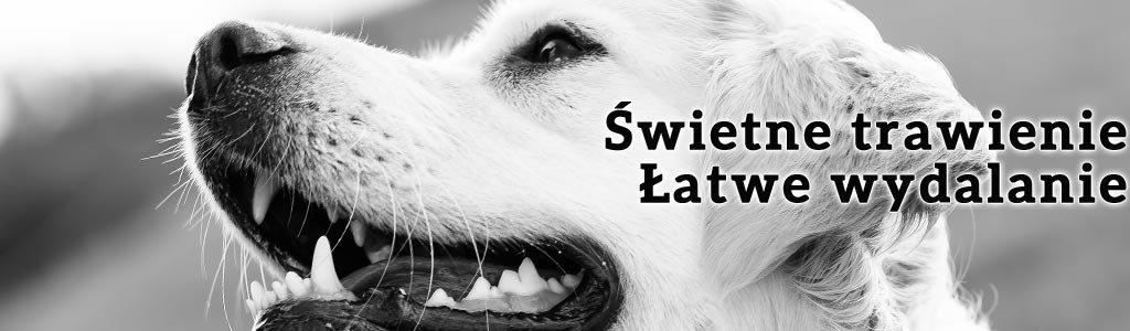 Odporność rodzi się w jelitach. Właściwa praca układu trawiennego to zdrowy pies. Dobra karma dla psa dba o jego układ trawienny.