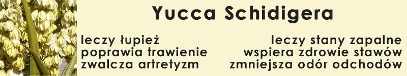 yucca yuka schidiger - leczy łupież, poprawia trawienie, zwalcza artretyzm, leczy stany zapalne, wspiera zdrowie stawów i ścięgien, zmniejsza odór odchodów
